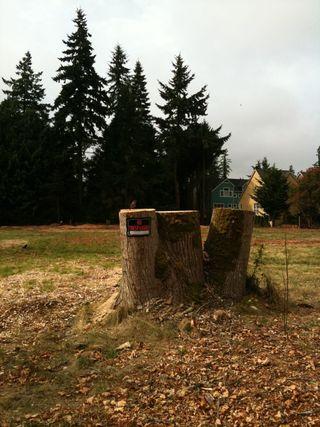 3 stumps