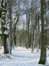 A_arbres_sous_la_neige