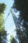 Grue_et_arbres_uw