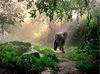 0_eco_elephant