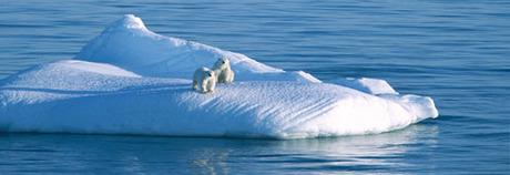 Polar_main