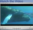 Whales_movie
