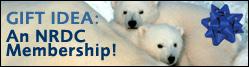 Polarbearsmembership