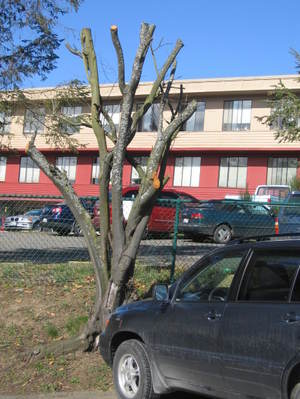 Treeparking2