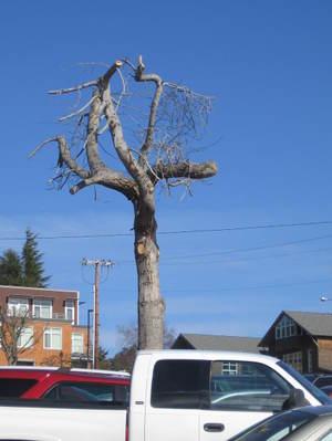 Treeparking3