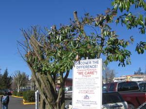 Treeparking5
