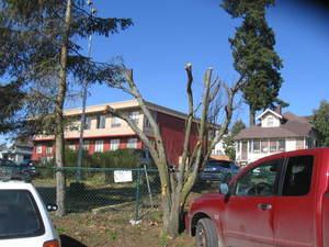 Treeparking6