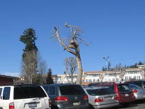 Treeparking7